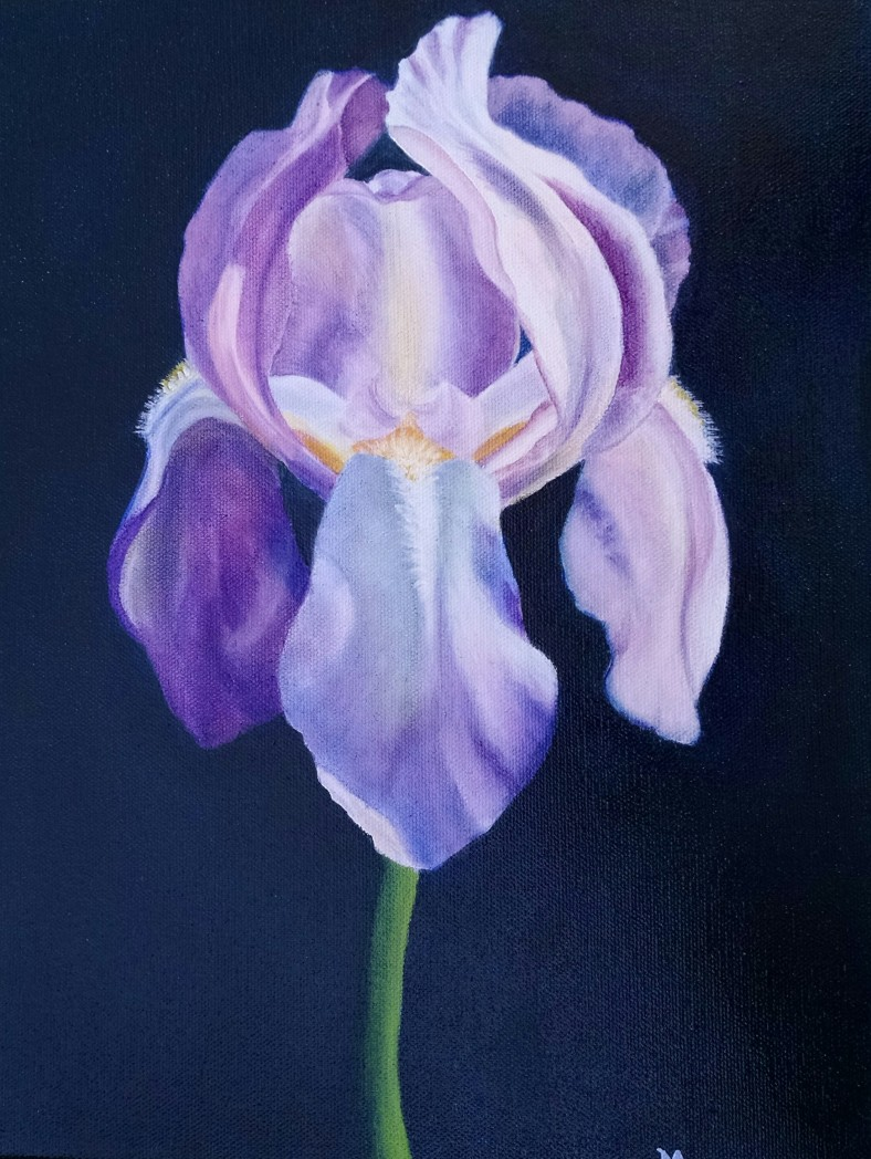 purpleirisii